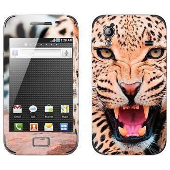 Виниловая наклейка «Рычащий леопард» на телефон Samsung Galaxy Ace