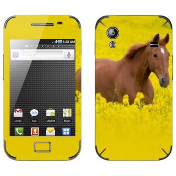 Виниловая наклейка «Лошадь на лугу» на телефон Samsung Galaxy Ace
