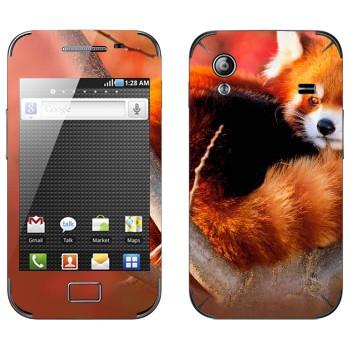 Виниловая наклейка «Малая панда» на телефон Samsung Galaxy Ace