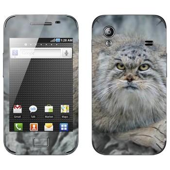 Виниловая наклейка «Манул» на телефон Samsung Galaxy Ace