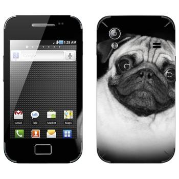 Виниловая наклейка «Мопс» на телефон Samsung Galaxy Ace