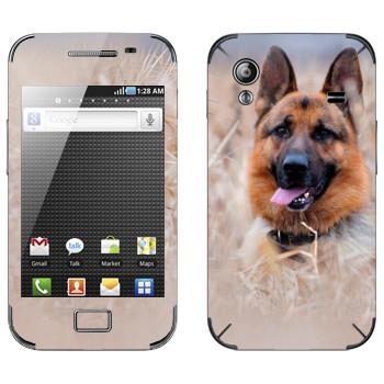Виниловая наклейка «Овчарка на лугу» на телефон Samsung Galaxy Ace