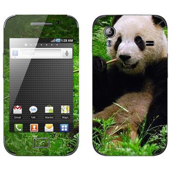 Виниловая наклейка «Панда ест бамбук» на телефон Samsung Galaxy Ace