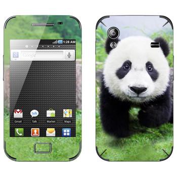 Виниловая наклейка «Панда в природе» на телефон Samsung Galaxy Ace
