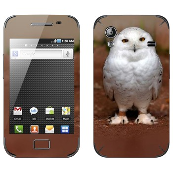 Виниловая наклейка «Полярная сова» на телефон Samsung Galaxy Ace