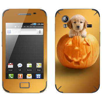 Виниловая наклейка «Щенок в тыкве» на телефон Samsung Galaxy Ace