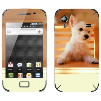 Виниловая наклейка «Щенок за столом» на телефон Samsung Galaxy Ace
