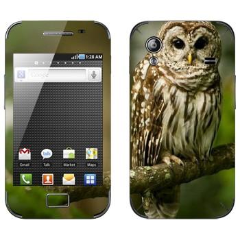 Виниловая наклейка «Сова на ветке» на телефон Samsung Galaxy Ace