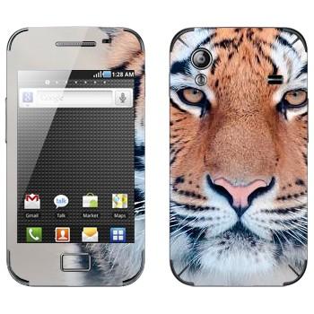 Виниловая наклейка «Спокойный тигр» на телефон Samsung Galaxy Ace