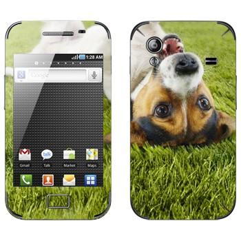 Виниловая наклейка «Веселый щенок на траве» на телефон Samsung Galaxy Ace