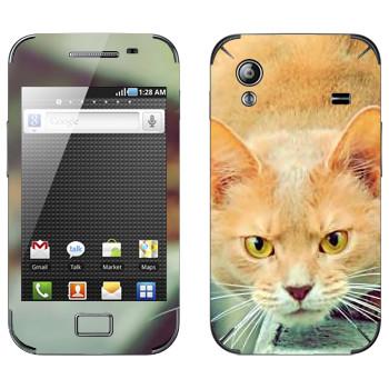 Виниловая наклейка «Злой рыжий кот» на телефон Samsung Galaxy Ace