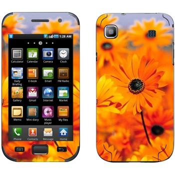 Виниловая наклейка «Оранжевые цветы Диморфотека» на телефон Samsung Galaxy S